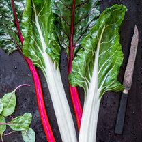 Gemüseguerilla_Mangold_Titel_featured